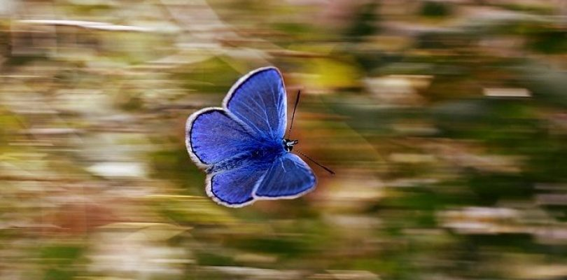 What Does a Butterfly Mean?